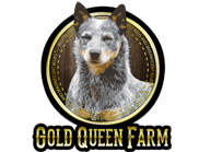 Australian Cattle Dog Gold Queen Farm – Especializado em Australian Cattle Dog Blue Heeler